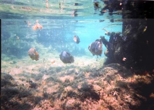 cenote azul 4 b