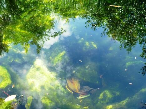 cenote cristalino 2