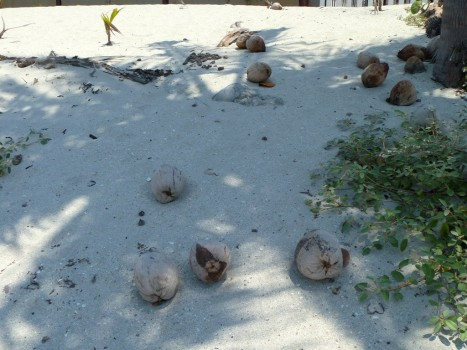 dzikie kokosy
