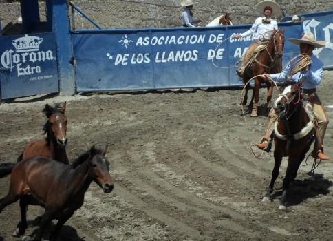 charreada łapanie konia