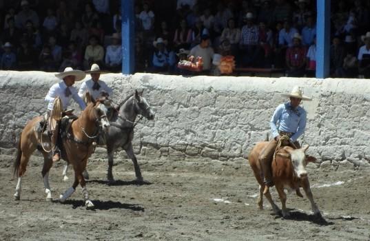 charreada ujeżdżanie byka