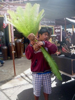 tonala - sprzedawca palm